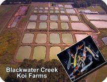 Blackwater Creek Koi Farm